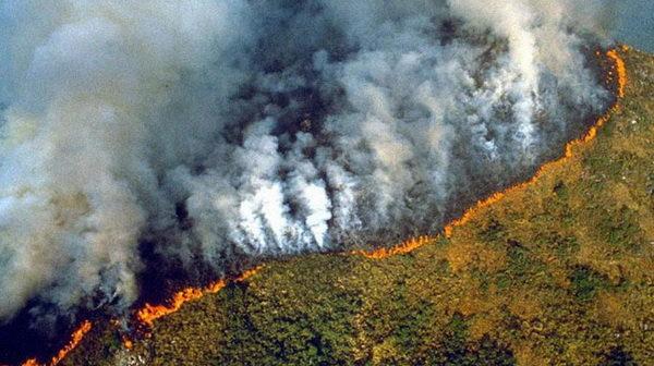 """""""Mushkëritë e botës"""" po shkatërrohen, zjarre masive në pyjet e Amazonës!"""